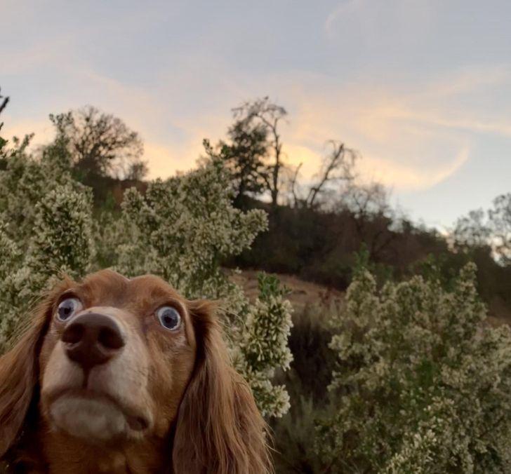 20+ Perros que se olvidaron de su naturaleza y no planean volver a recordarla