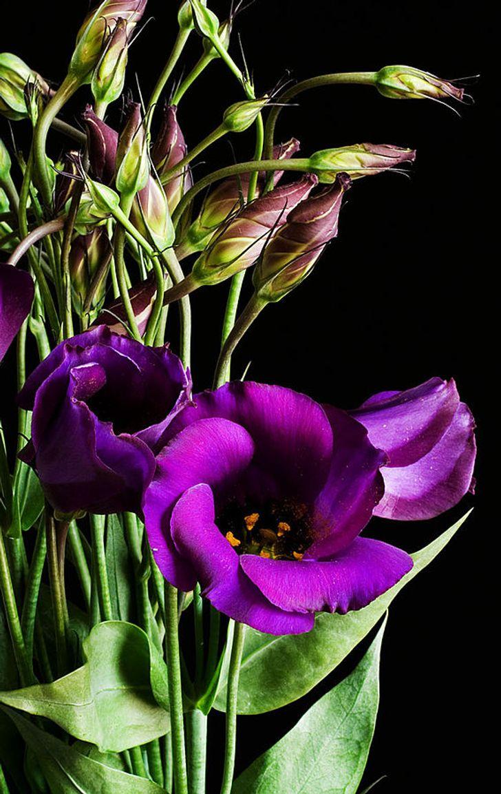 9 Flores que por su peculiaridad se encuentran entre las más caras del mundo
