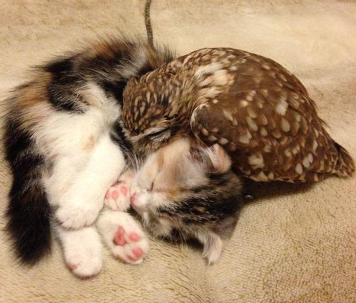 15+ Animales que están listos para darle un apretón de patas amistoso a cualquiera