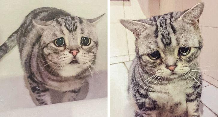 """Resulta que tu gato o tu perro puede sentirse ofendido si lo llamas """"mascota"""""""