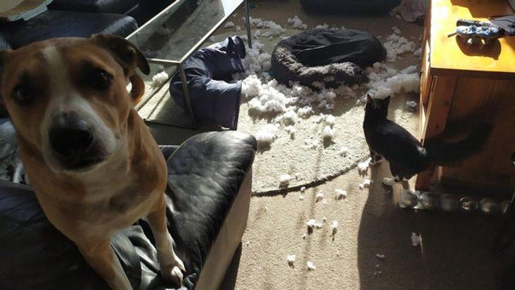 15 Fotos que muestran que nuestras mascotas también pueden tener días malos