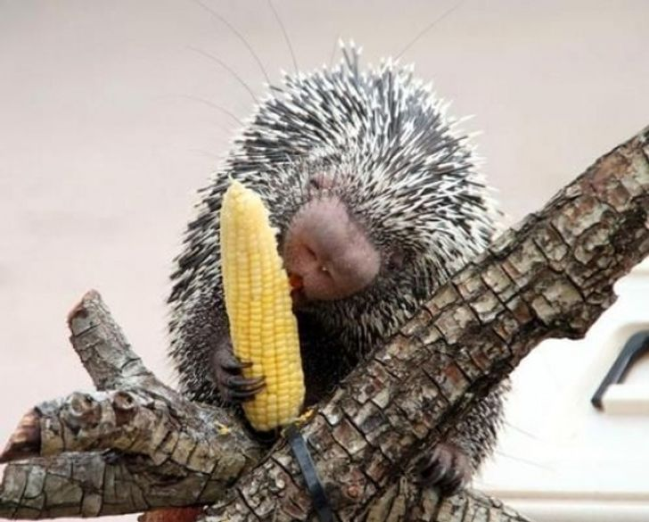 15 Animales que disfrutan libremente de nuestra comida sin tener remordimiento alguno