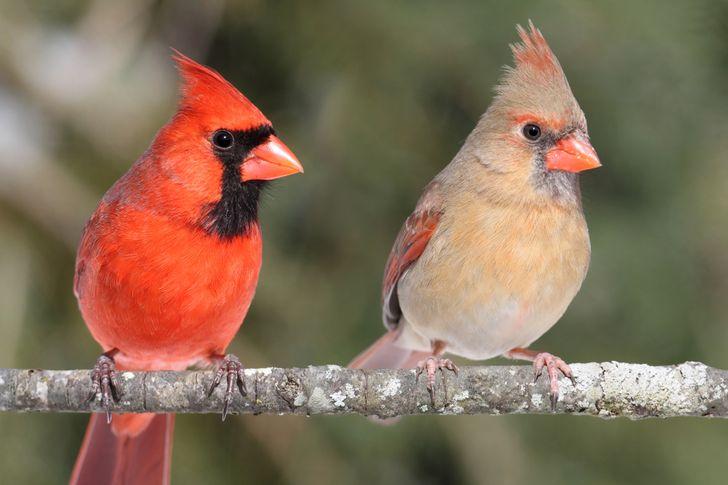 12 Especies en las cuales las hembras y los machos son tan distintos que cuesta creer que se presten atención