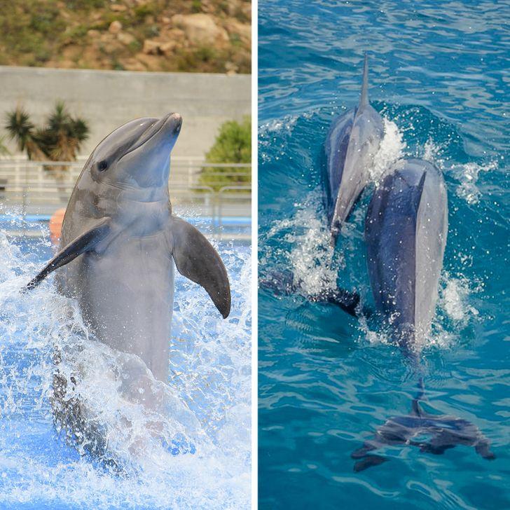 12 Datos sobre los delfines que nos hicieron ver su inteligencia desde otra perspectiva (y solo podemos amarlos aún más)
