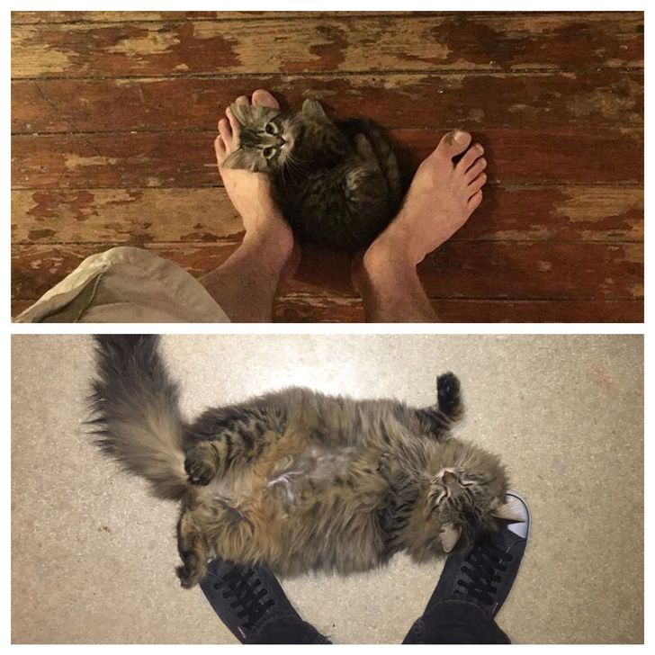 15Pruebas indiscutibles deque los gatos crecen demasiado rápido
