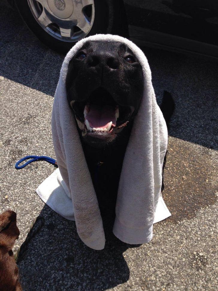 10 Preguntas y respuestas sobre el baño de los perros que surgen cada vez que nos toca asearlos