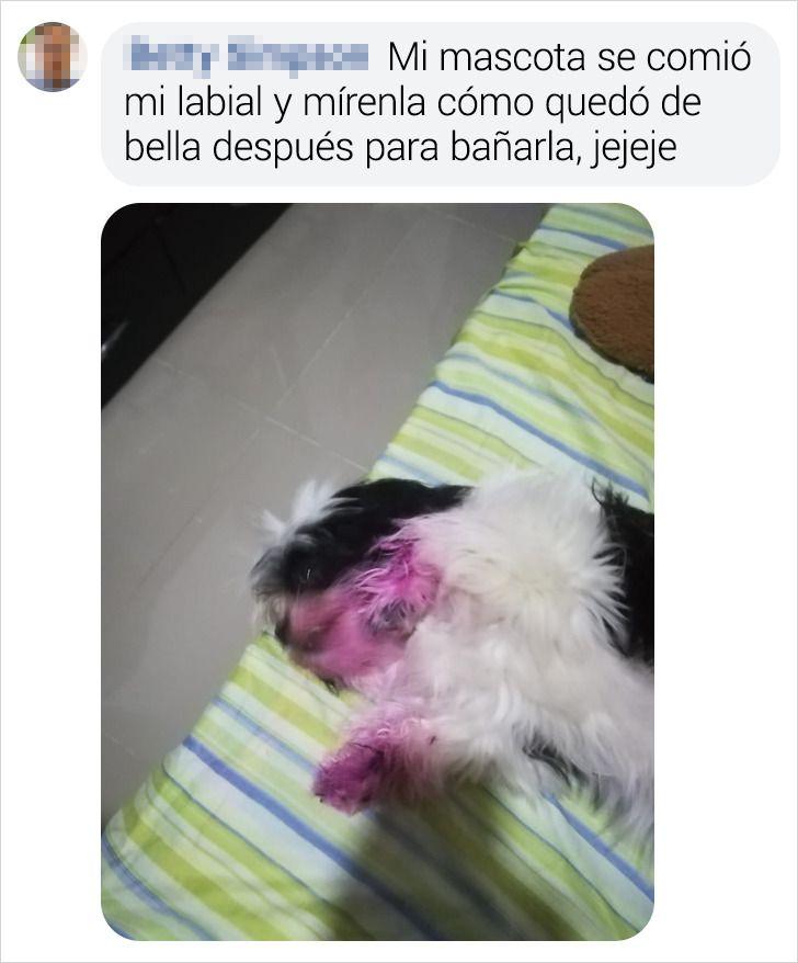 """15 Lectores de Genial contaron cómo atraparon """"in fraganti"""" a sus mascotas"""