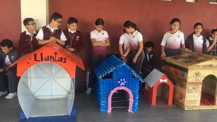 Niños mexicanos construyeron casitas para perros de la calle con materiales  reciclados, y el mundo entero