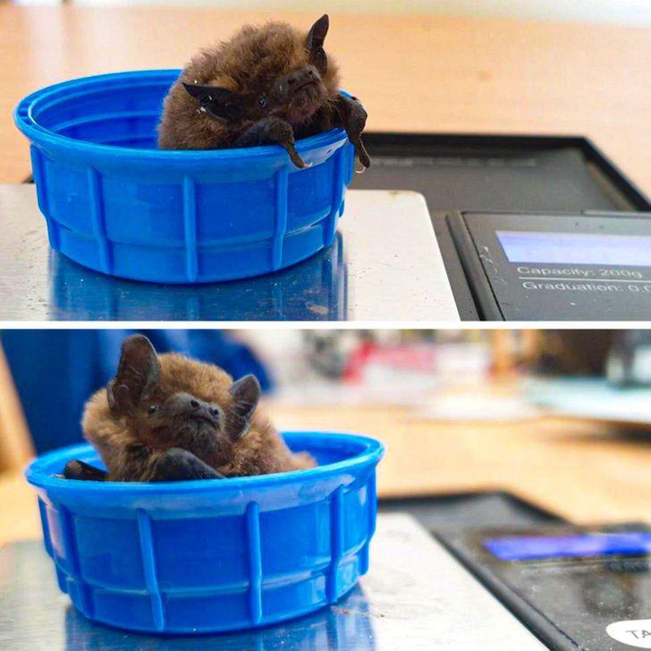 15+ Fotografías que muestran a los murciélagos desde un nuevo ángulo, y son mucho más lindos de lo que pensábamos