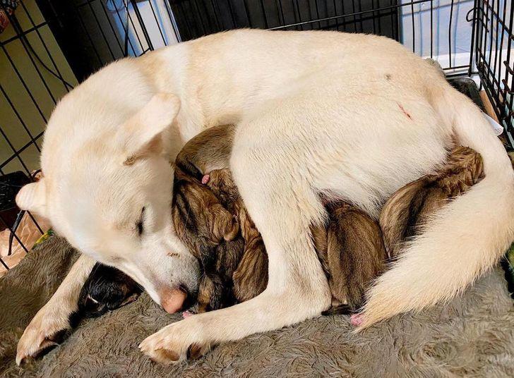 19 Fotos que prueban que los animales también pueden tener sentimientos muy profundos