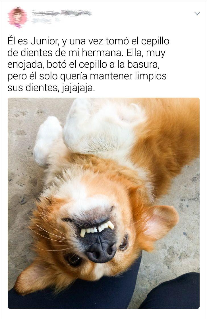 20+ Usuarios de la red contaron cuál es la mejor anécdota que vivieron junto con su mascota