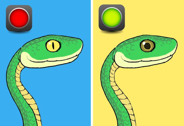 Que Hacer Si Te Cruzas Con Una Serpiente Y Como Distinguir Entre Una Venenosa Y Una