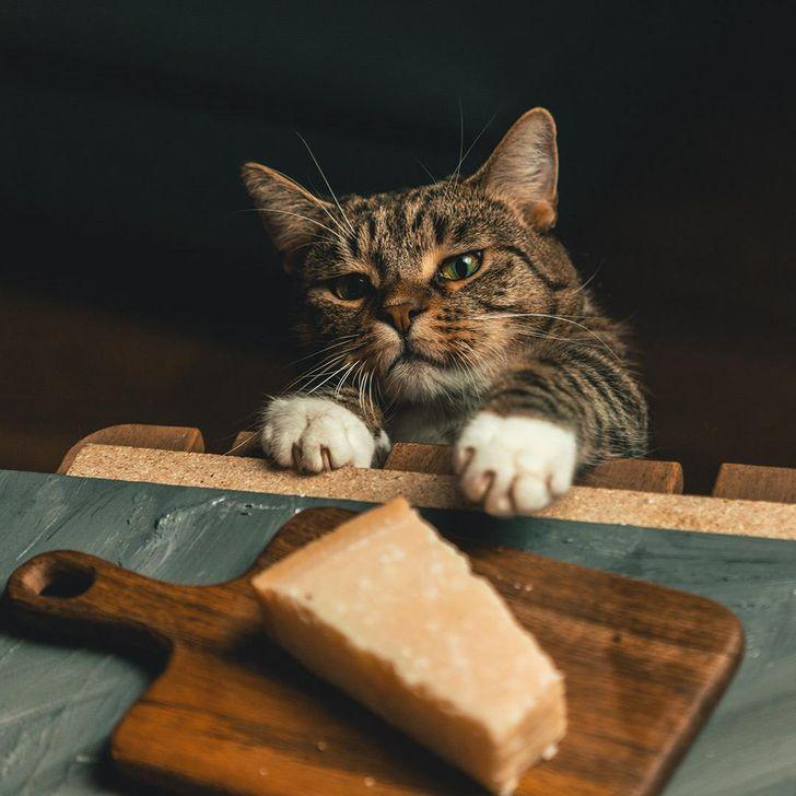 19 Gatos y roedores que demostraron tener un peculiar gusto por lo ajeno