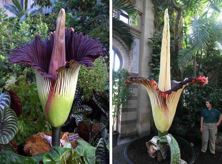 15 Plantas extrañas que no parecen ser de este planeta