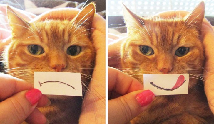 18 Autores de Genial usaron divertidos carteles para sumar expresiones a las fotos de sus mascotas