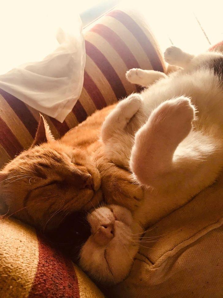 18 Fotos de gatitos durmiendo de cucharita que dan ganas de unírseles