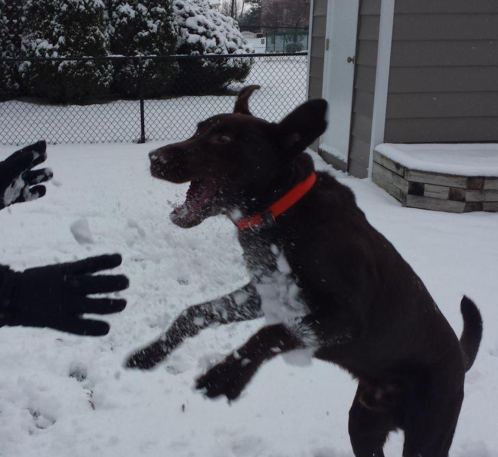 20 Mascotas que encontraron la felicidad en la nieve (mientras que con otras pasó algo diferente)