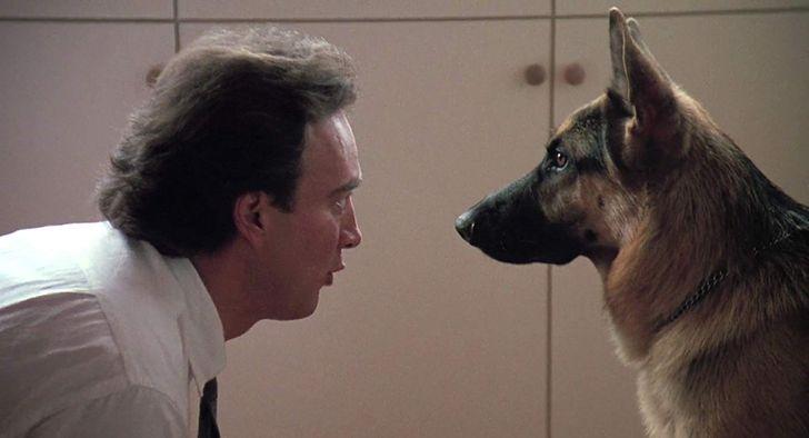 Por qué los perros pueden entender el lenguaje humano
