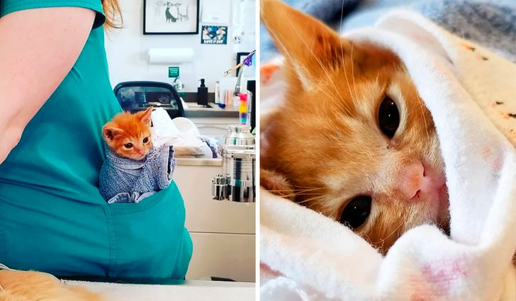 Rescataron a un gatito amante de los abrazos, y la veterinaria que lo cuidó nos contó su historia