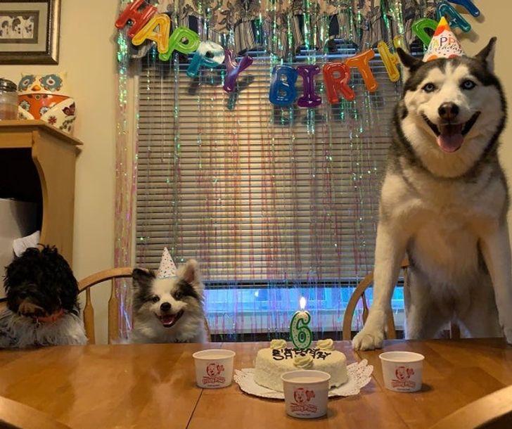 20+ Mascotas que están teniendo el mejor día de sus vidas y se nota en sus caras