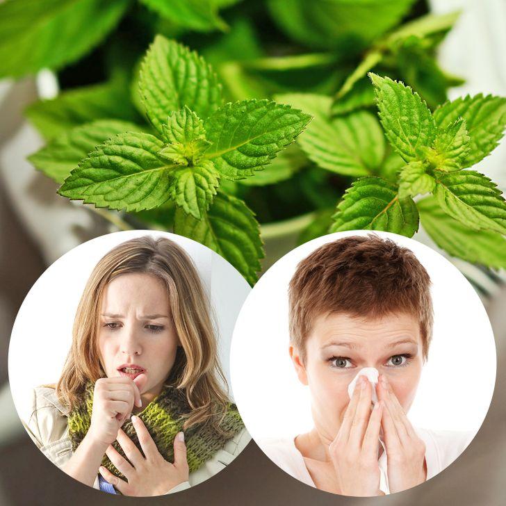 10Hierbas yplantas medicinales que tienen grandes beneficios enlasalud