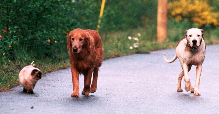 Estudio explica qué determina una buena relación entre un perro y un gato
