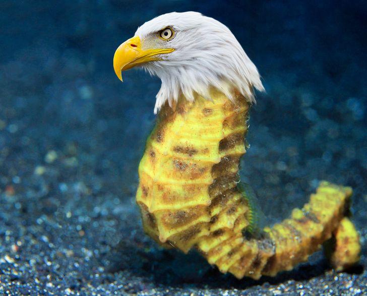 15 Mezclas de animales que solo son posibles en nuestra imaginación