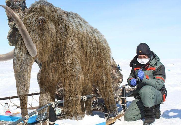 9 Objetos que estuvieron perdidos en el hielo y que sorprendieron a los científicos
