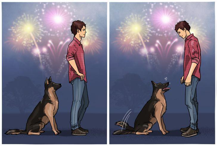 8 Formas de calmar a una mascota ansiosa, especialmente durante los fuegos artificiales o en un viaje al veterinario