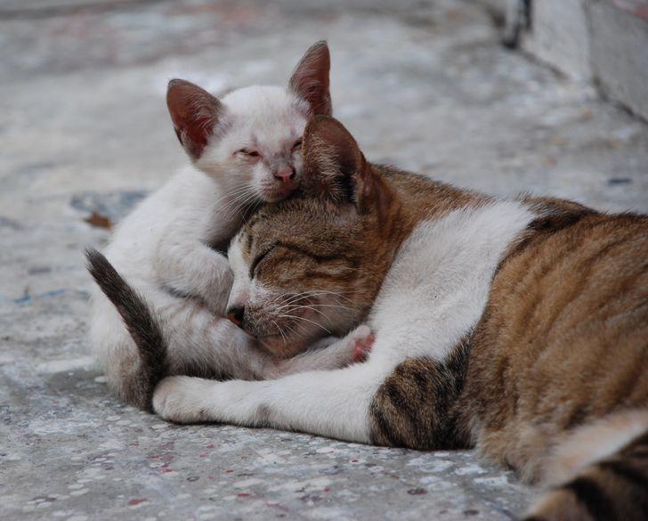 La gente de Japón comparte un juego que cambia la forma de encontrar mascotas perdidas: pidiendo ayuda a los gatos callejeros