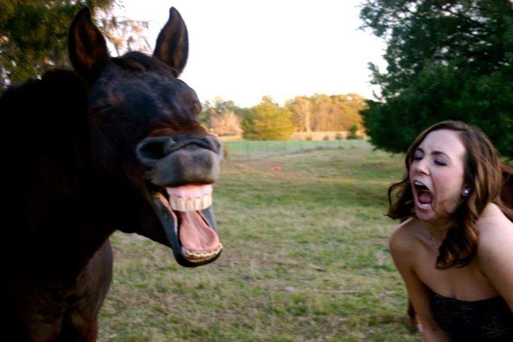 Los caballos pueden hacer muchas expresiones similares a las de los seres humanos, según estudio