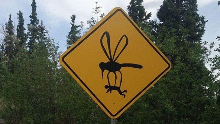 Un estudio reveló por qué los mosquitos pican más a unos que a otros (y algunas formas para combatirlos)