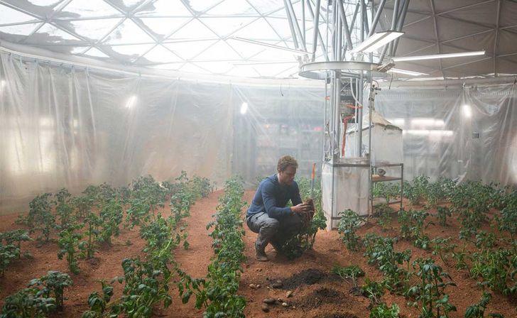 Un experimento de la NASA muestra que será posible sembrar vegetales en Marte