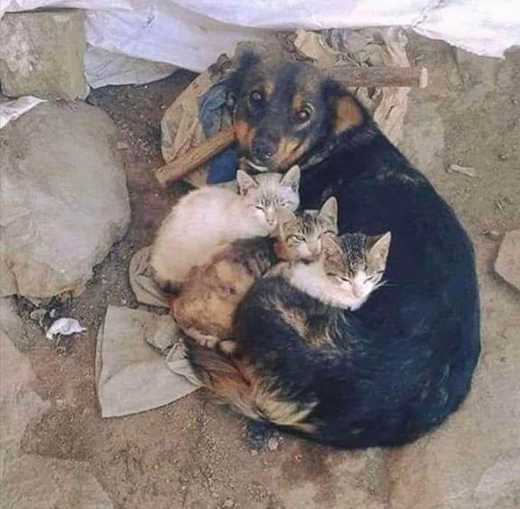 20+ Animales con un gran corazón que respondieron a la desgracia ajena con rapidez