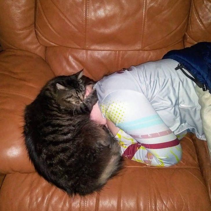 20+ Personas que adoptaron un gato y ahora sueñan con tener al menos un minuto de descanso
