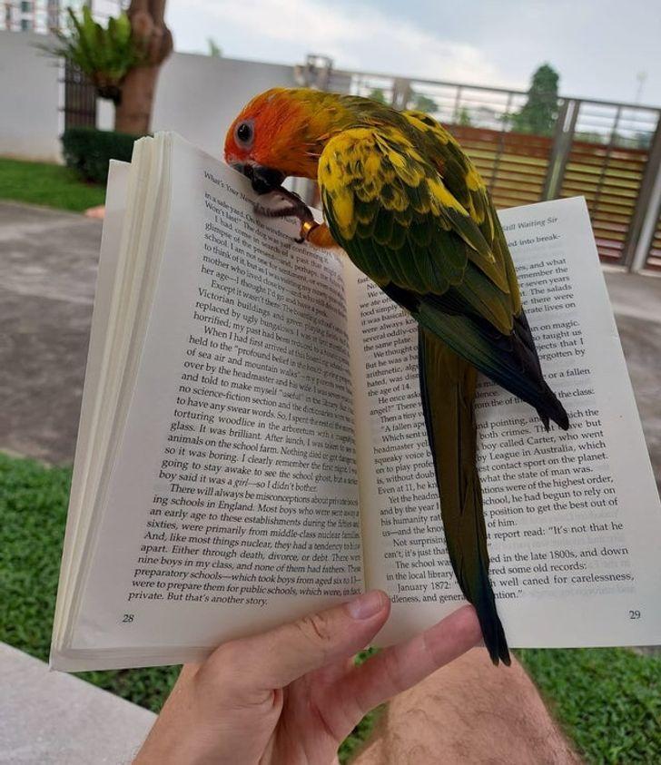 20+ Aves que cometieron travesuras y, aunque fueron descubiertas, no les importó