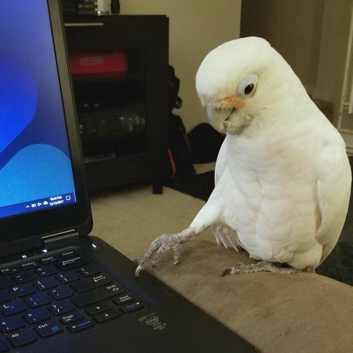 20+ Pájaros encantadores que son tan dulces y juguetones como los niños