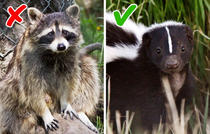 10 exotic animals that you can have at home
