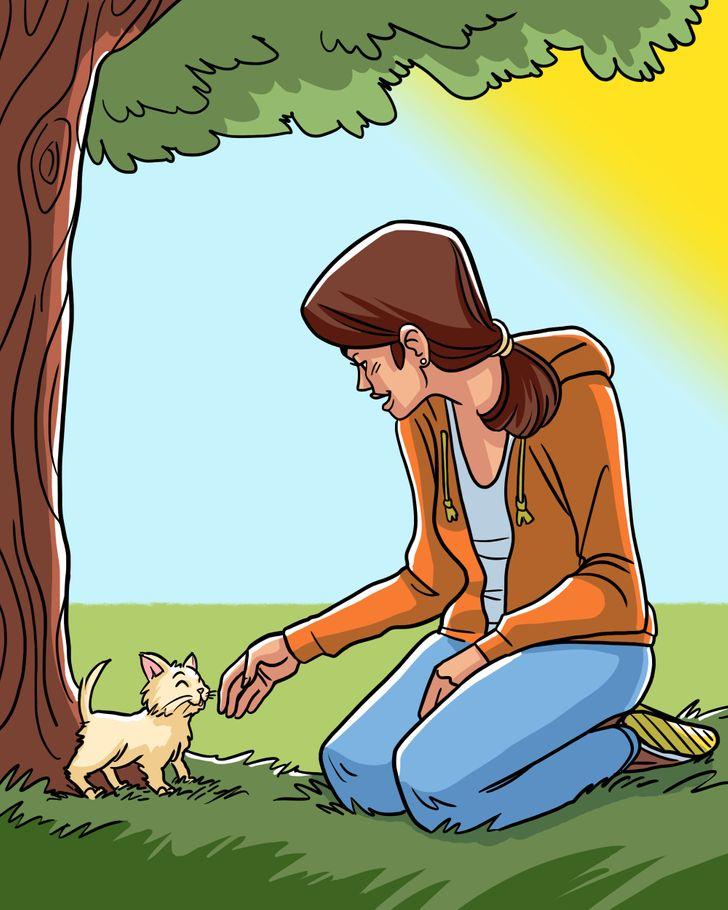 Veterinario revela cómo deberíamos cargar a nuestro gato y no morir en el intento