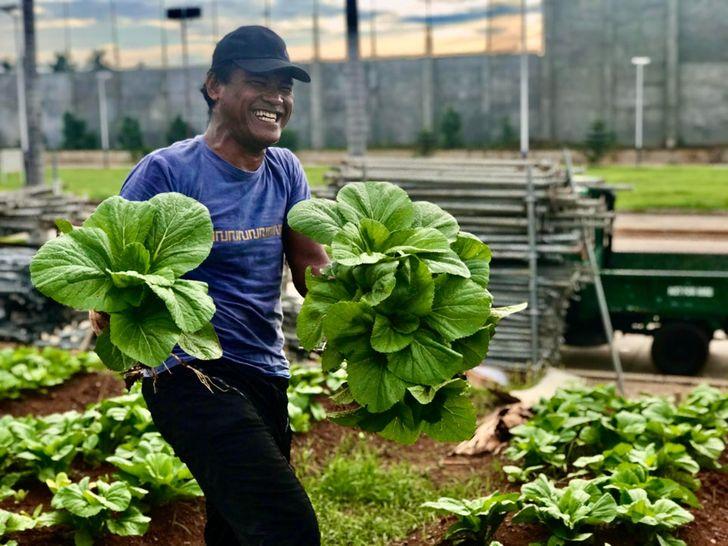 25 Personas comparten sus enormes cosechas (y queremos saber cómo lograron tales resultados)