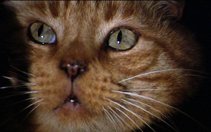 12 Películas donde los gatitos tienen un papel fundamental (¡y adorable!)
