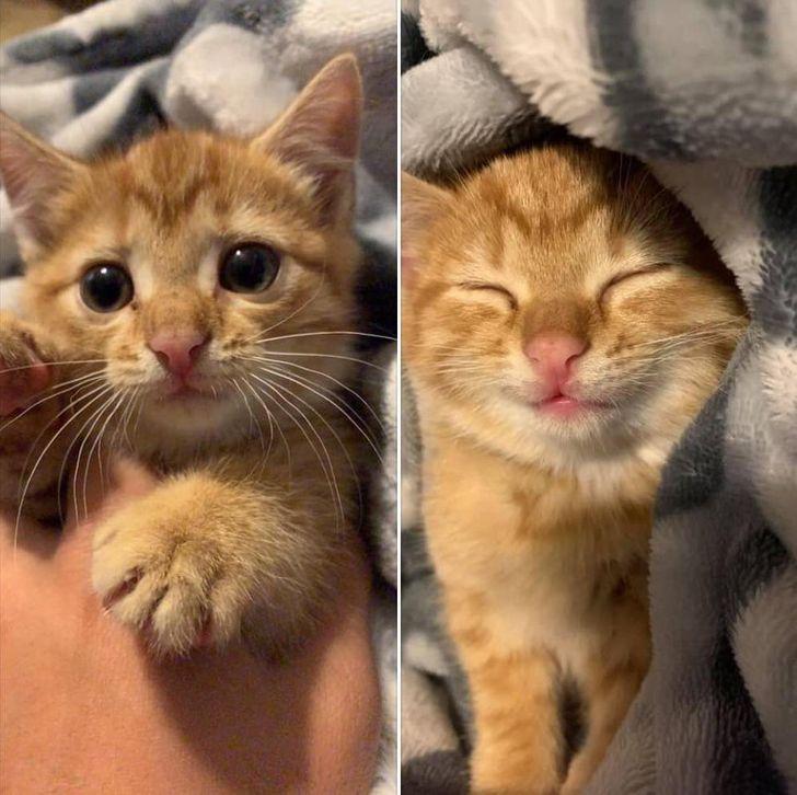 20+ Fotos de antes y después de algunas mascotas que son como el día y la noche