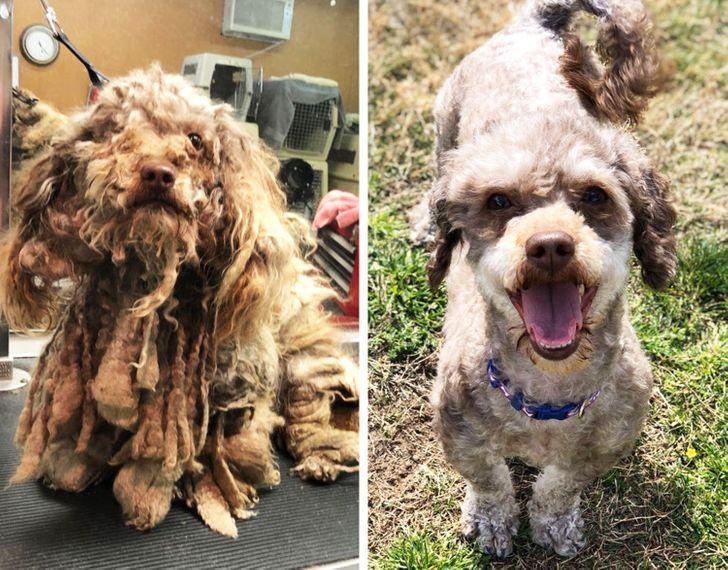20+ Animales que estuvieron al borde de la desesperación hasta que un verdadero ser humano llegó a sus vidas