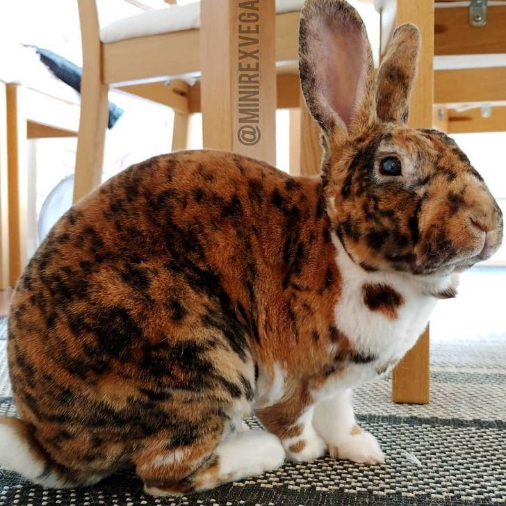 """15 Animales que parecen haber sido """"besados"""" por la madre naturaleza"""
