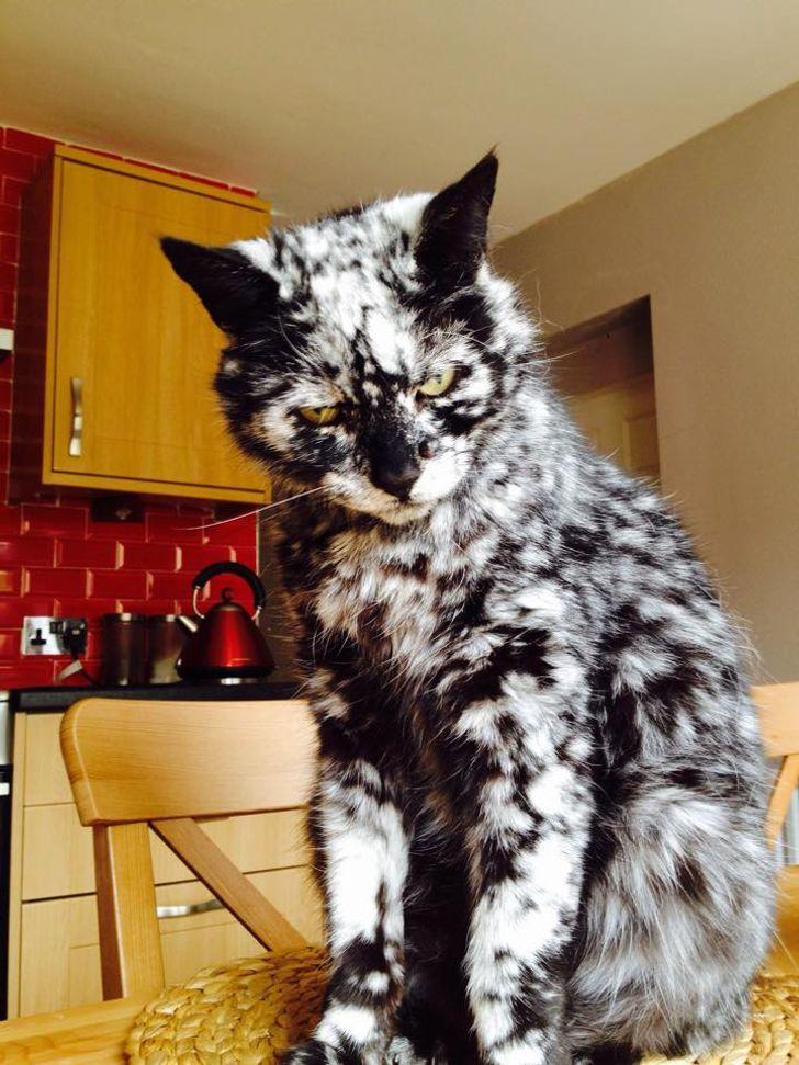 20+ Mascotas de apariencia inusual con una elevada dosis de encanto