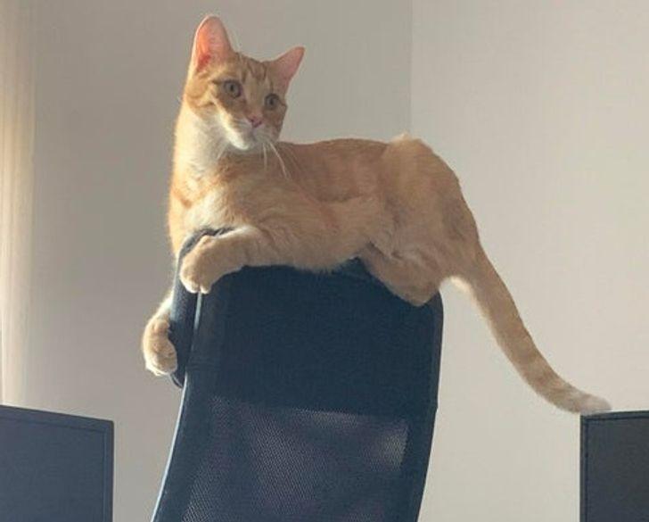 Por qué tus gatos son adictos a cajas y espacios pequeños