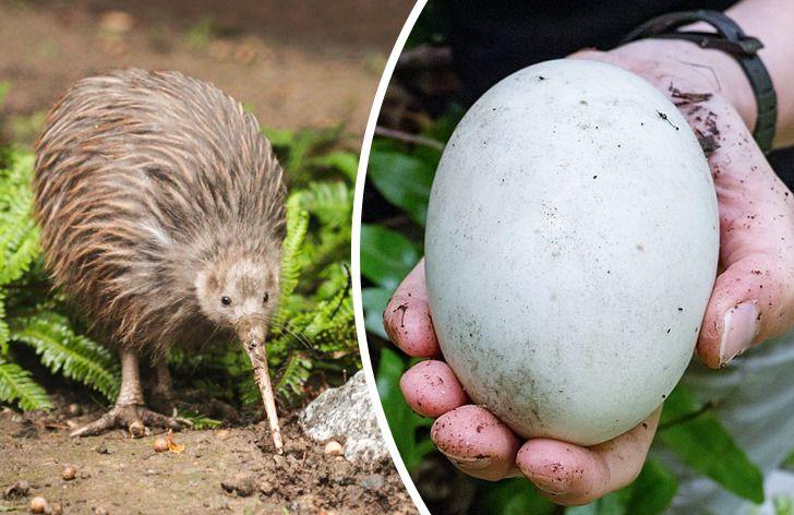 10 Animales cuyas gestaciones y nacimientos son simplemente extraños