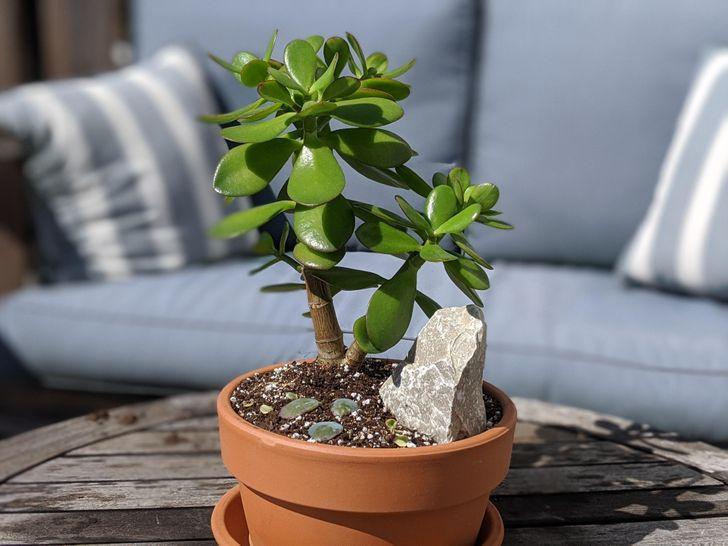 17 Plantas que son fáciles de cuidar y con las que puedes decorar tu hogar (ideales para los que tienen poco tiempo)