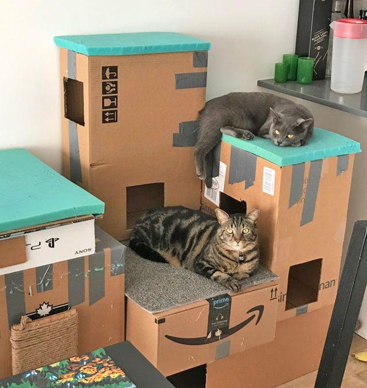 20+ Mimados gatitos que se sienten los reyes de la casa