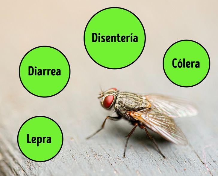 Lo que realmente sucede cuando una mosca se posa en tu comida